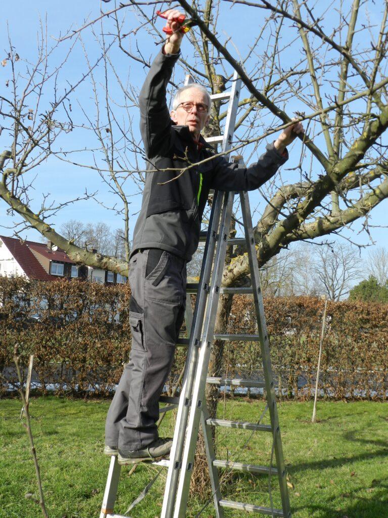 Tipps für Obstbaum Winterschnitt